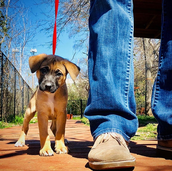 Your Pets in a Divorce- advice from a judge, article on duffeeandeitzen.com blog